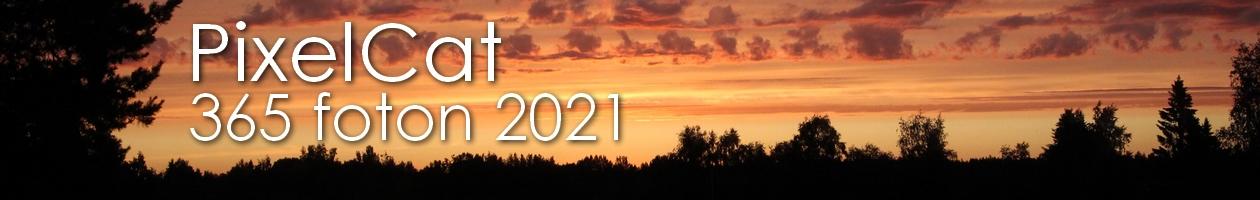 PixelCat – Fotoutmaningen 2021